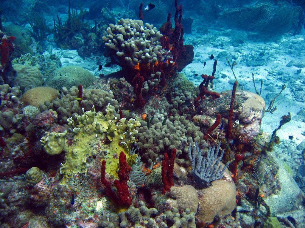 Récifs - Coraux, éponges et gorgones