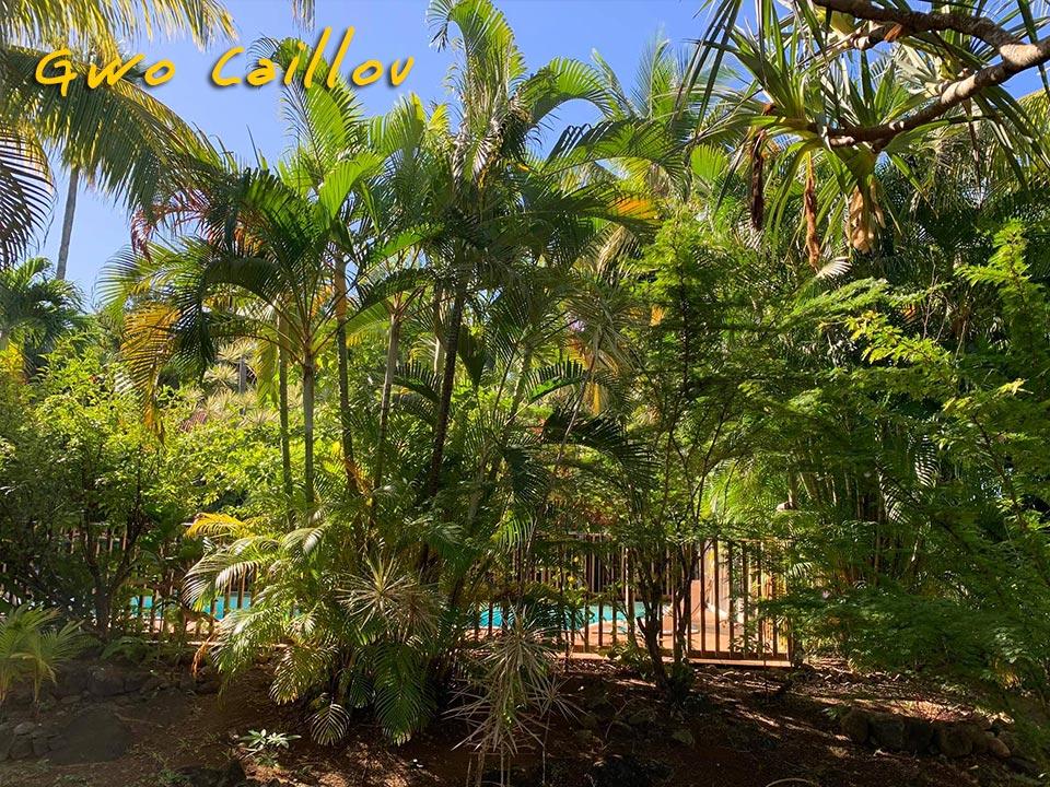 Gwo Caillou - Parc de la piscine
