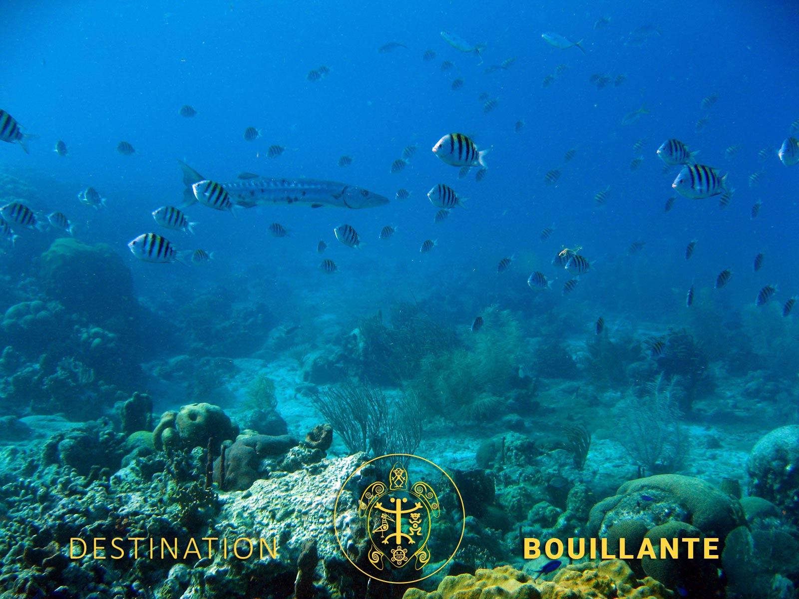 Plongée Anse à la Barque - Bouillante