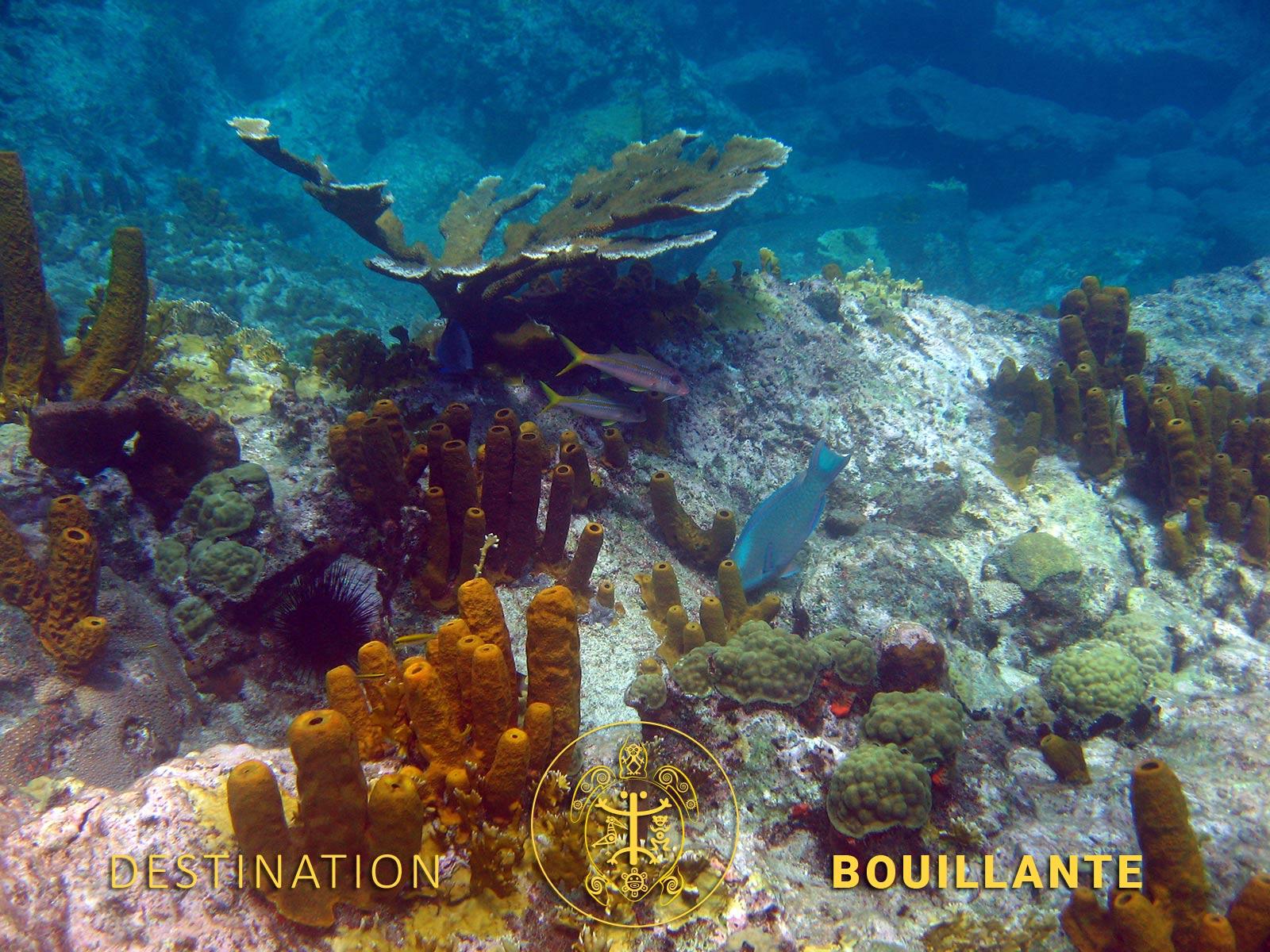 Plongée Réserve Cousteau - Bouillante