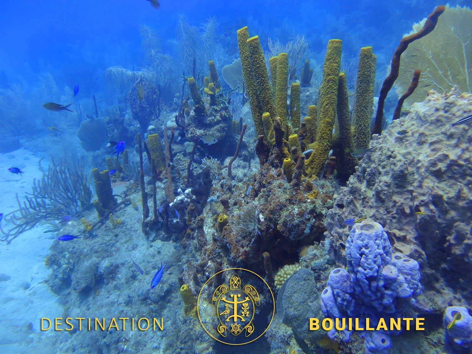 Plongée Anse du Dépôt - Bouillante
