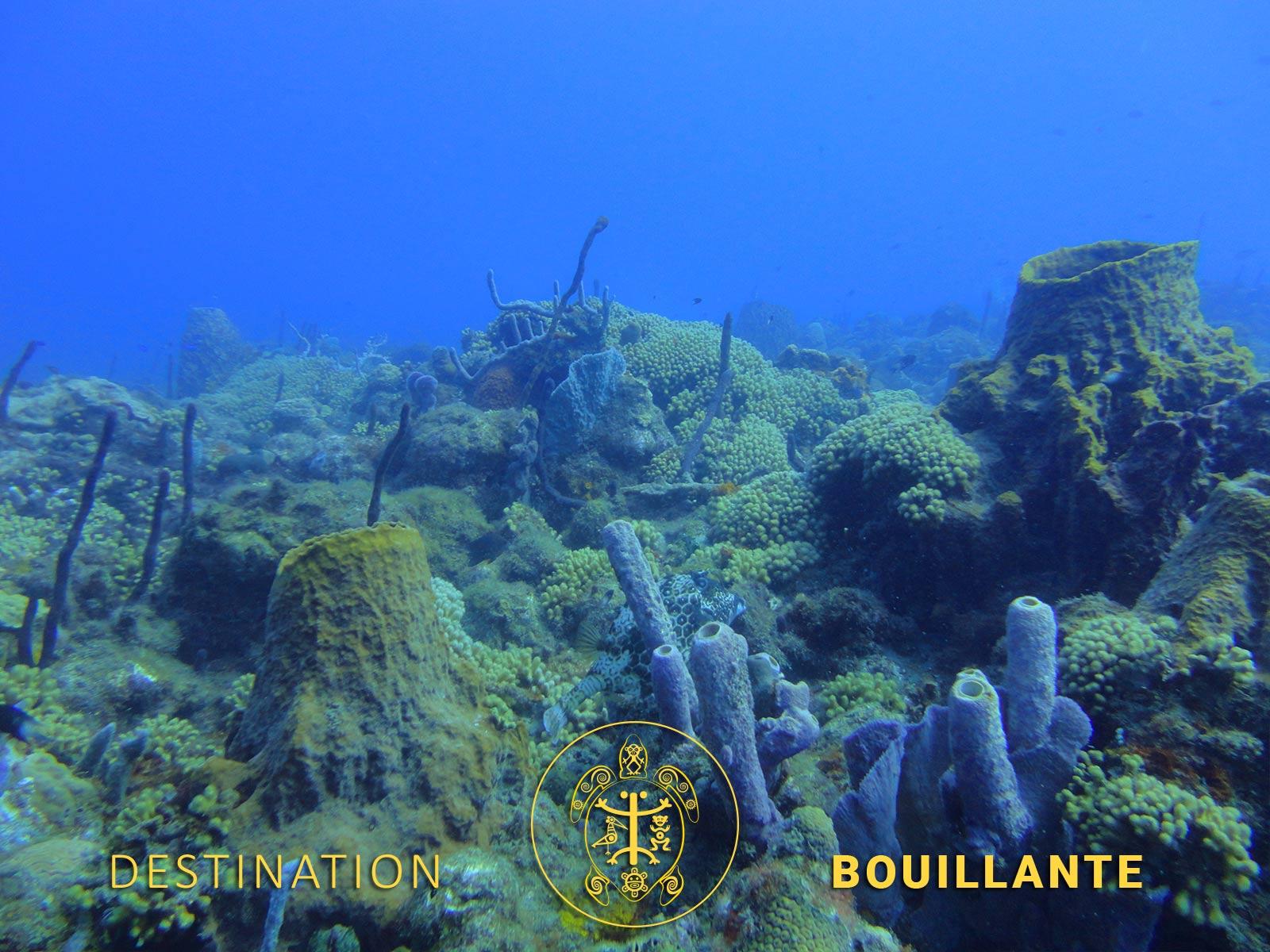 Plongée à Douënel - Bouillante