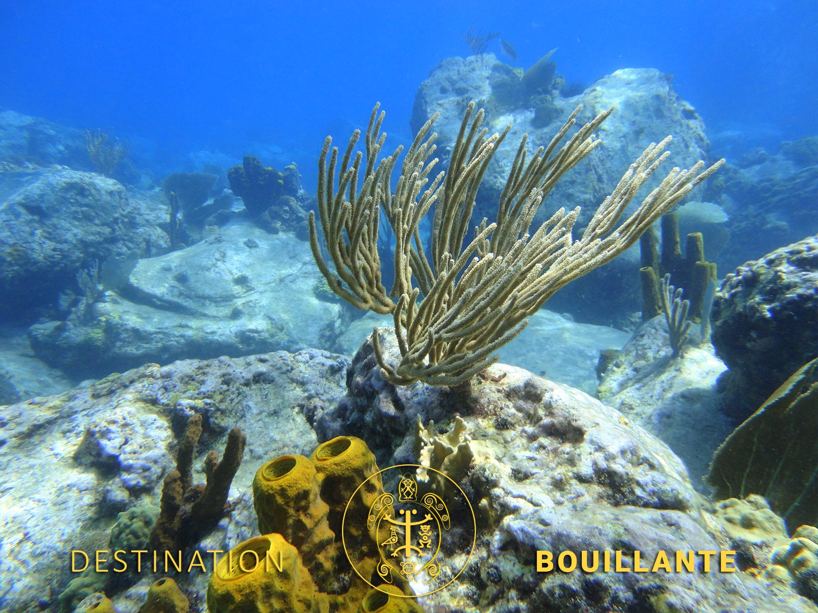 Plongée Petite-Anse - Bouillante