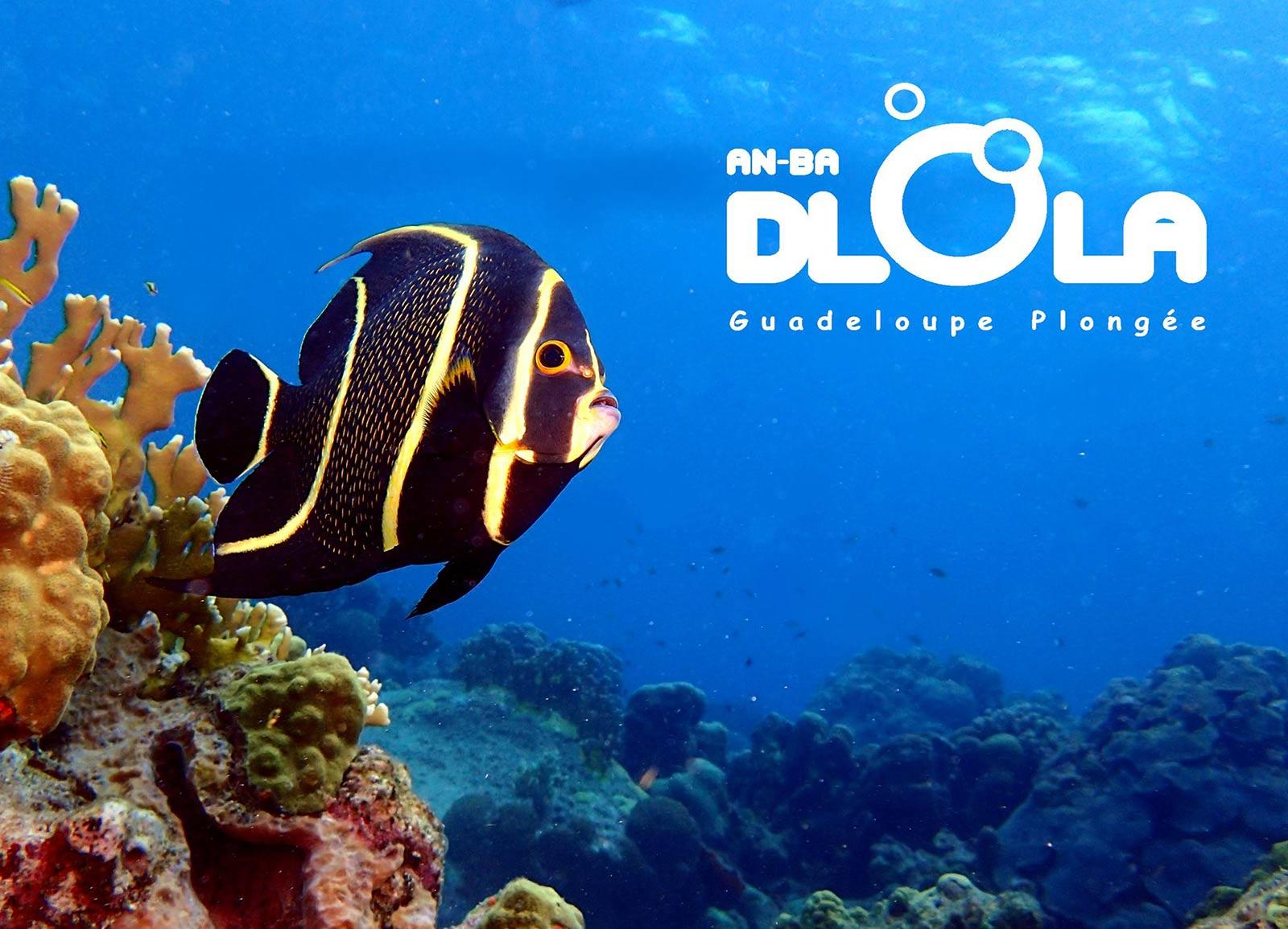 Rando palmée guidée - Réserve Cousteau