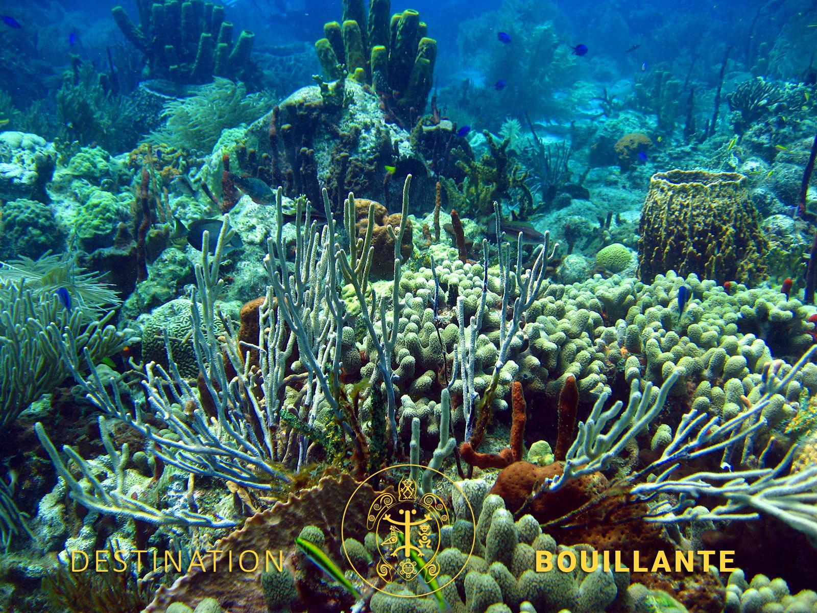 Récifs coralliens - Réserve Cousteau