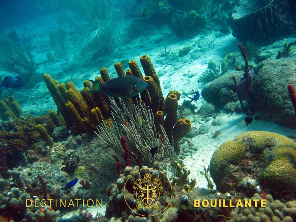 Réserve Cousteau de Bouillante