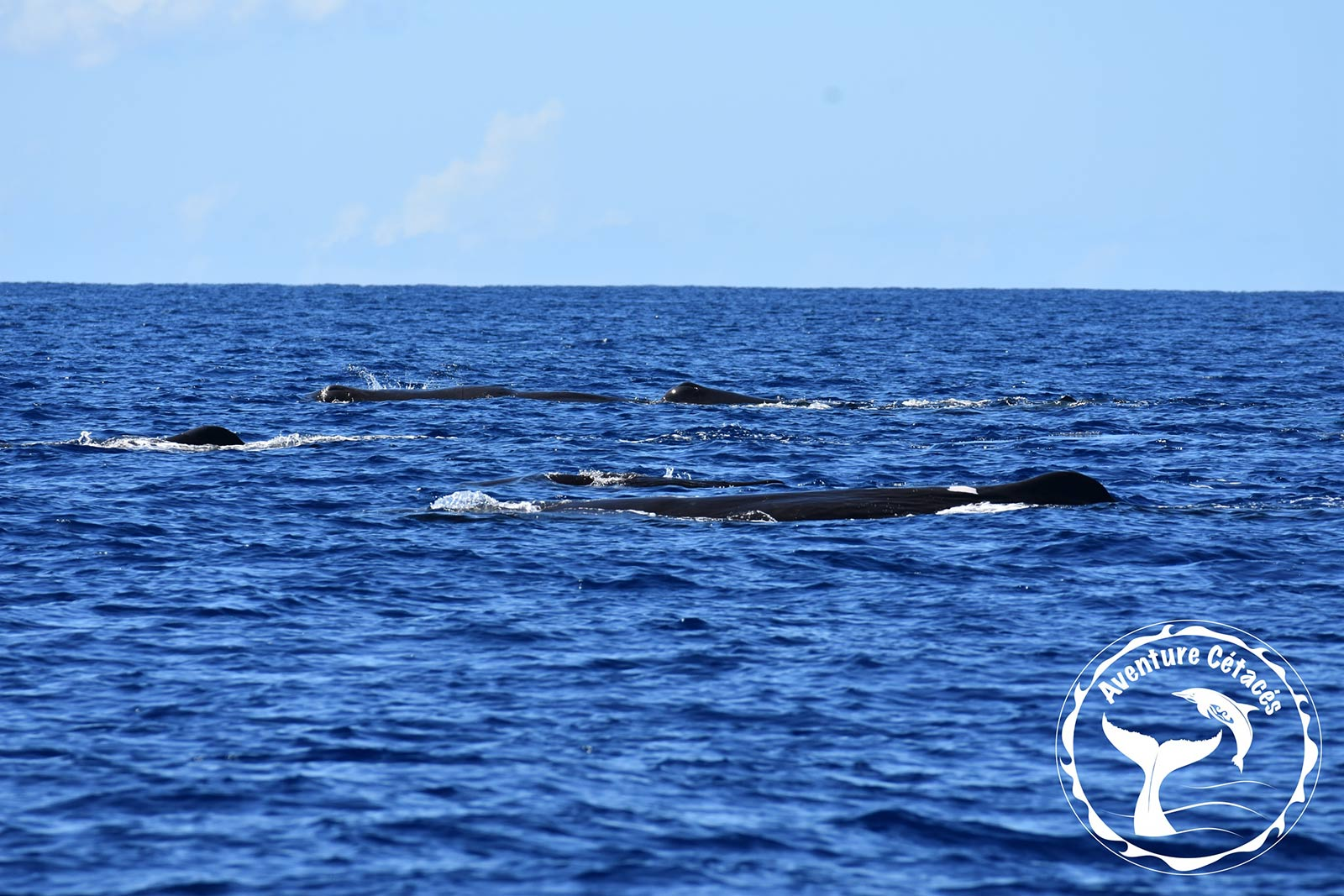 Aventure Cétacés - Baleines