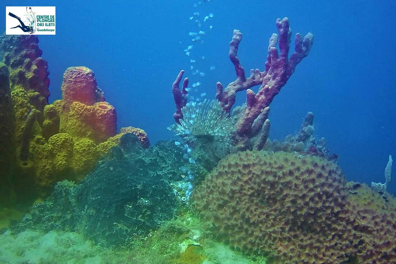 Centre de plongée des Ilets - Réserve Cousteau