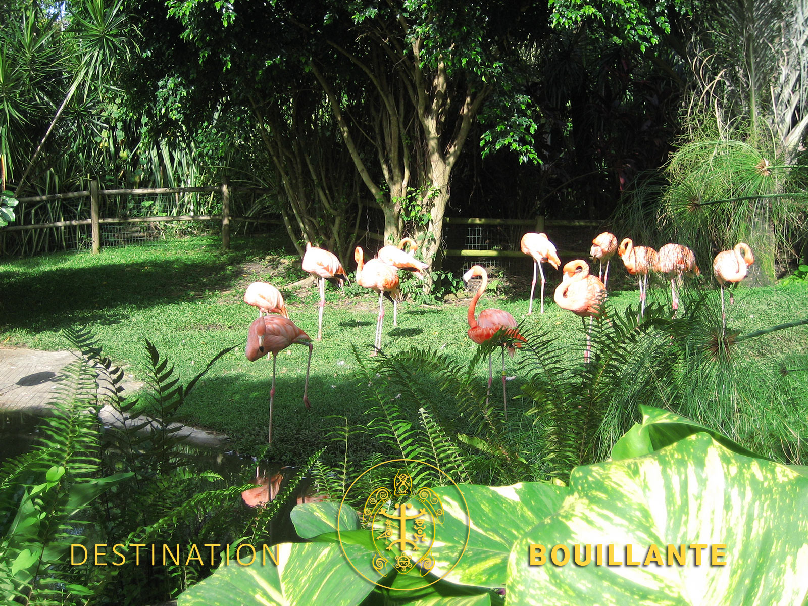 Deshaies - Parc botanique