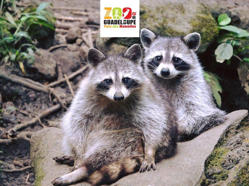 Zoo de Guadeloupe – Bouillante