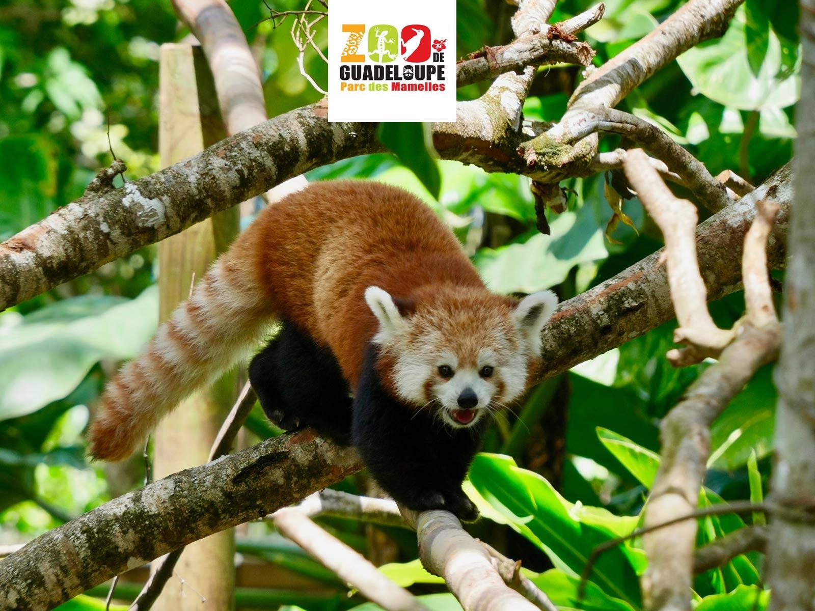 Zoo de Guadeloupe - Bouillante